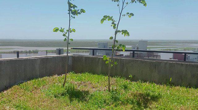 Arboles en terraza